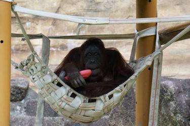 多摩動物公園。行くなら秋がおすすめ!