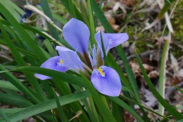 【京王百草園】和の花!春の庭園散歩におすすめです!