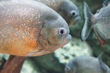親しみやすくて気軽にいける【しながわ水族館】。海の生き物を学ぼう!