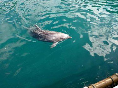 【三津シーパラダイス】沼津から近い水族館。海の中のイルカが見られる!