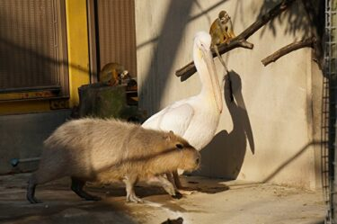 異種の動物たちが仲良し?!癒やしのフォトブック。びっくりどうぶつフレンドシップ