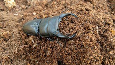 カブトムシやクワガタの幼虫飼育。加湿に「水道水」は使って大丈夫?